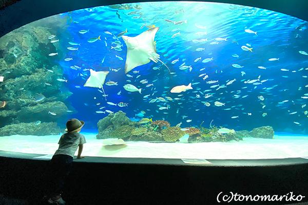 水族館のおさんぽ&明日からの博多「ぼわっと」のお知らせ_c0024345_12354267.jpg