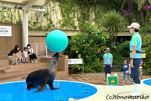 水族館のおさんぽ&明日からの博多「ぼわっと」のお知らせ_c0024345_12354272.jpg