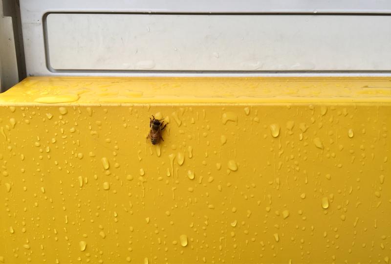 雨宿り蜜蜂。_f0183846_12122019.jpg