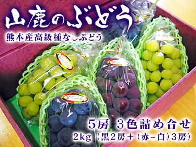 熊本ぶどう 社方園 令和2年度、本日(7/7)初出荷!朝採りの高級種なしぶどうを大好評販売中!_a0254656_13485143.jpg