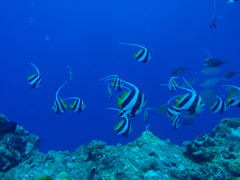 2014.08 奄美 The 4th day The 1st Dive_a0013160_00024884.jpg