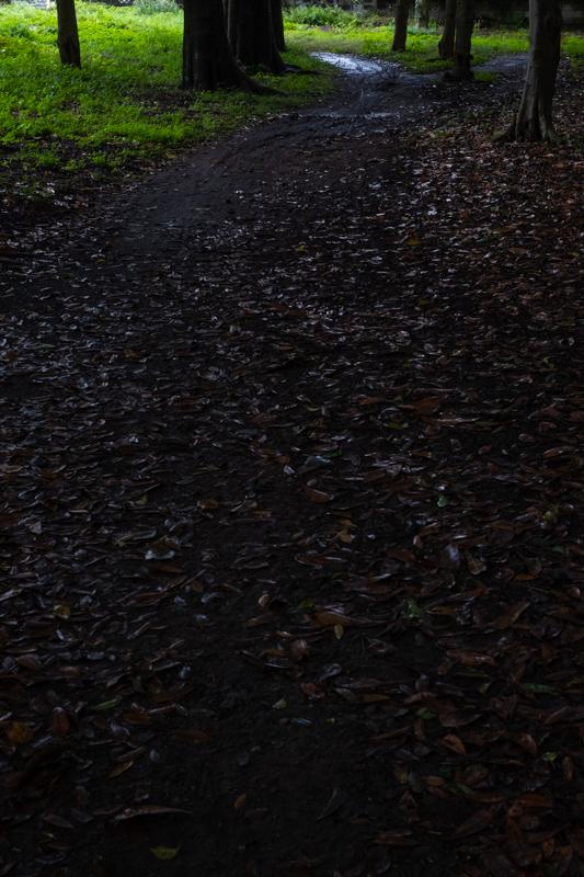 雨の神社_a0261169_11593252.jpg