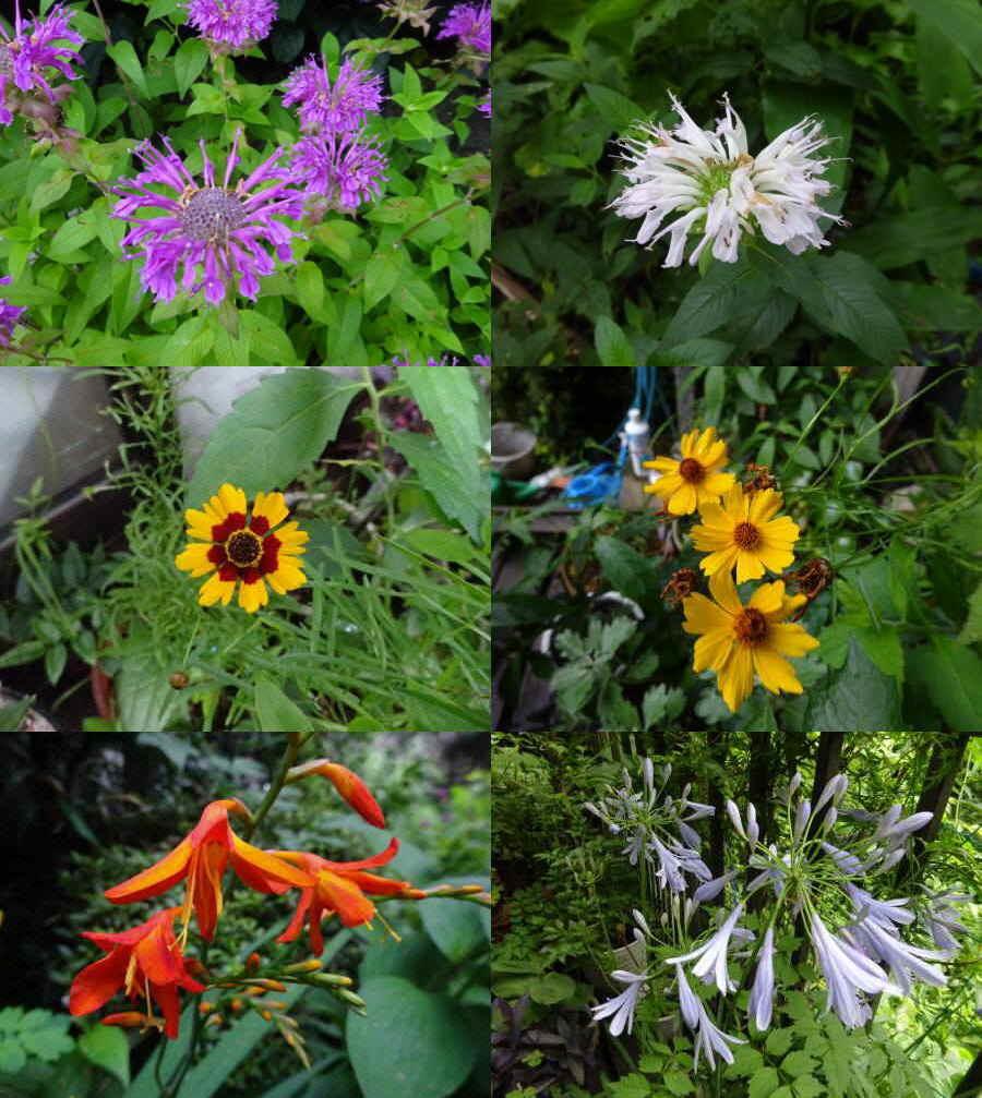 庭の花 夏その4_f0059673_22240696.jpg