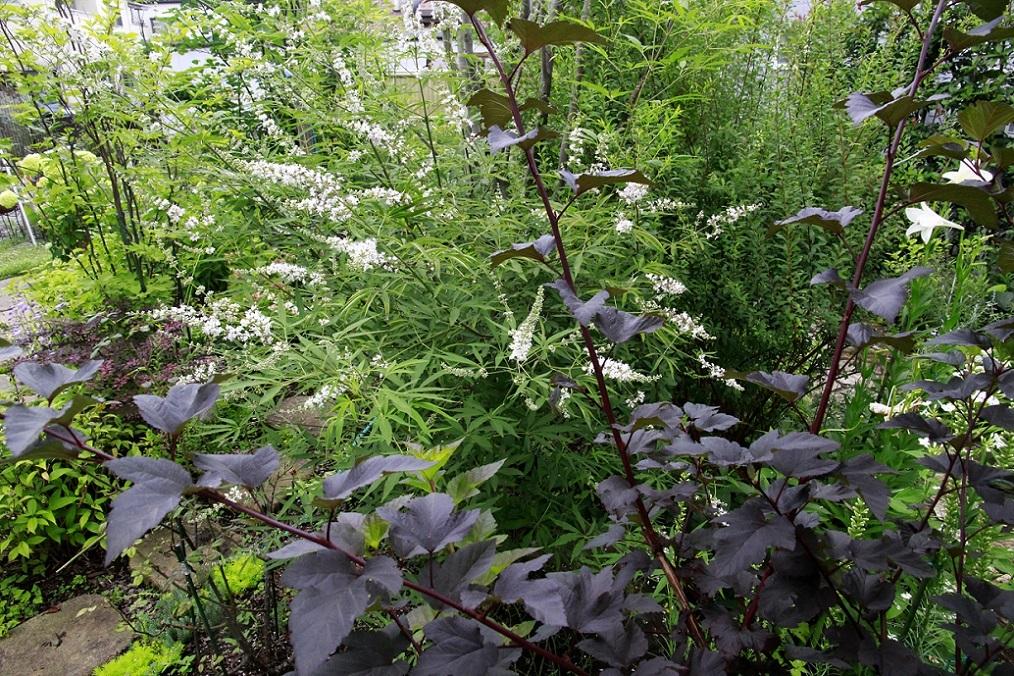 白花のニンジンボク_a0107574_12432534.jpg