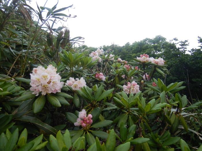 安達太良山・湯川 ~ 2020年7月5日_f0170180_01225179.jpg