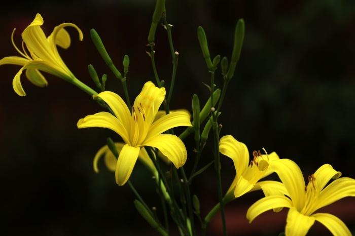 Lemon yellowのさわやかさ_c0037200_15063008.jpg