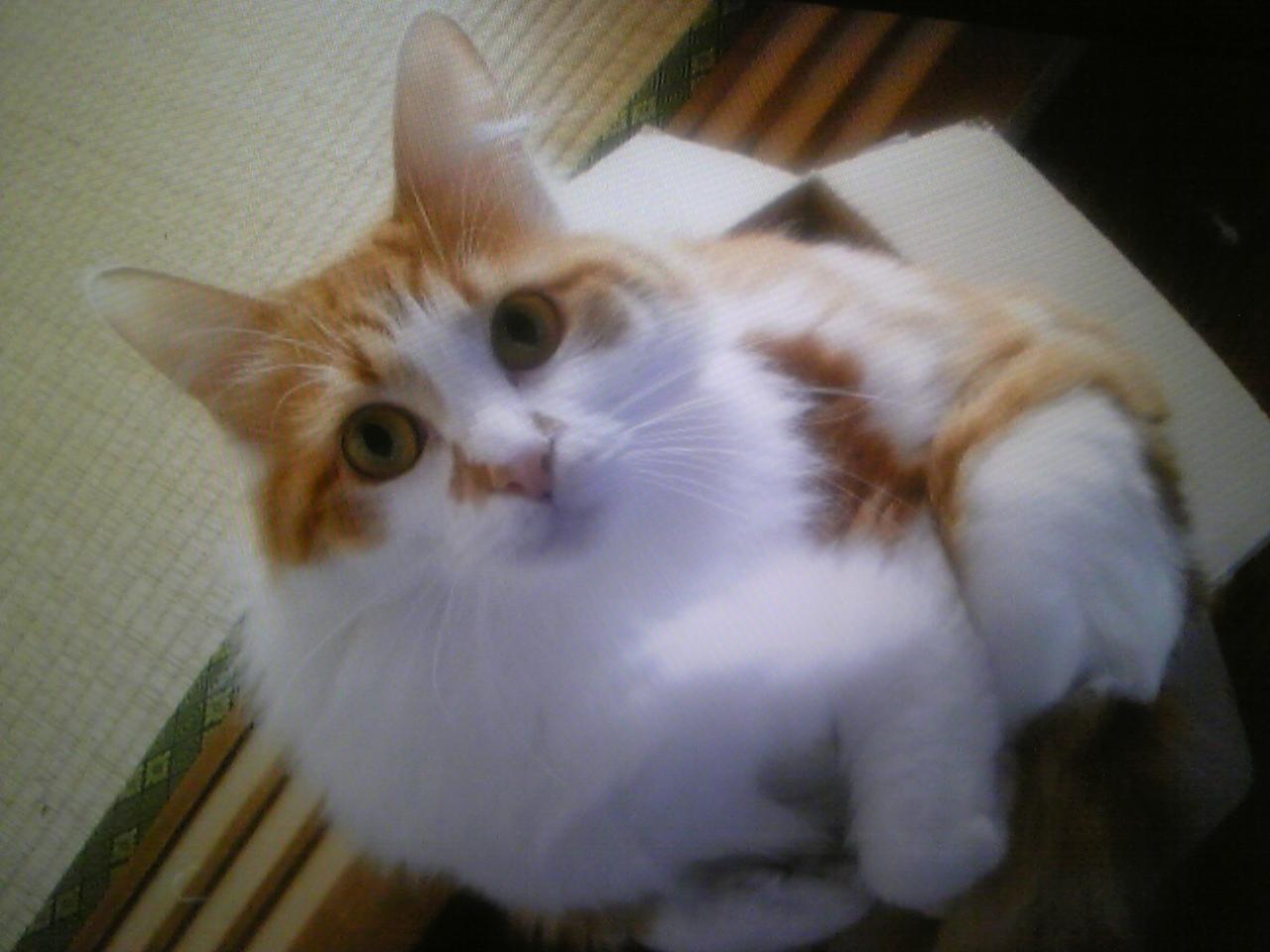 ニコちゃんのこと_b0189509_23001660.jpg