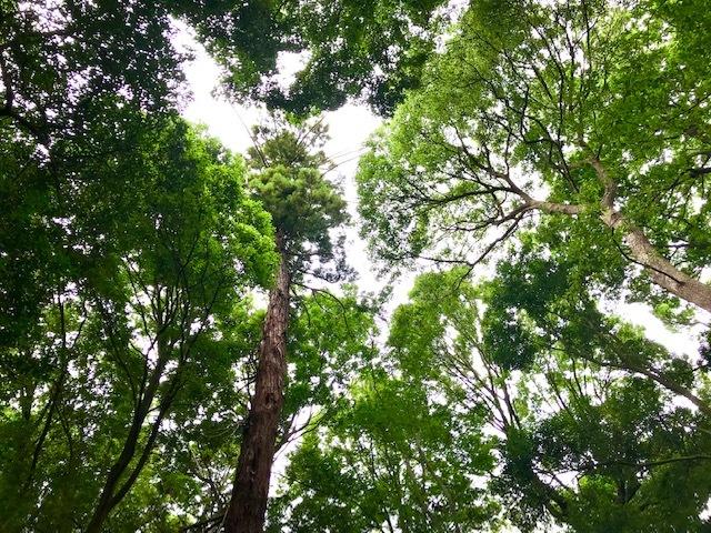 神社の森でボイスヒーリング_d0085018_20313076.jpg