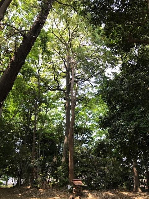 神社の森でボイスヒーリング_d0085018_21014821.jpg
