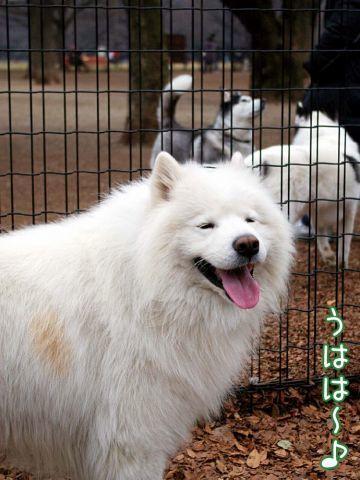 犬マスクふたたび_c0062832_15595229.jpg