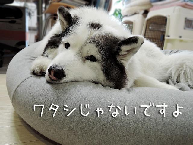 犬マスクふたたび_c0062832_16055808.jpg