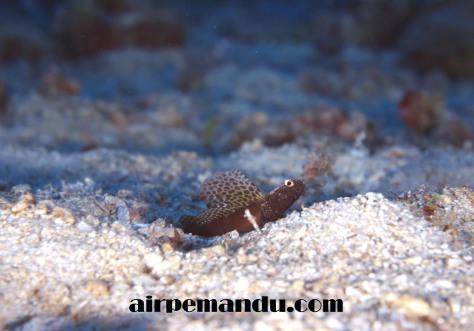 7月8日昼間でも全開サンゴの産卵_c0070933_20292988.jpg