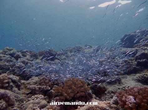 7月8日昼間でも全開サンゴの産卵_c0070933_20293544.jpg