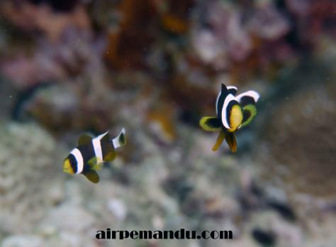 7月8日昼間でも全開サンゴの産卵_c0070933_20294188.jpg