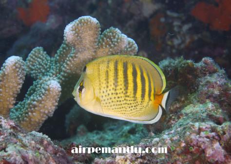 7月8日昼間でも全開サンゴの産卵_c0070933_20294882.jpg