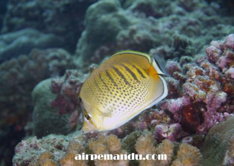 7月8日昼間でも全開サンゴの産卵_c0070933_20295517.jpg