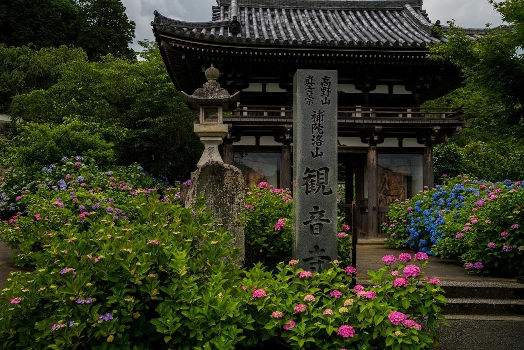 観音寺~紫陽花_e0363038_15295892.jpg
