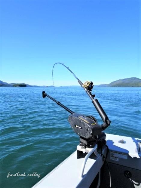 海へ野へ Mooseすね肉ポットロースト_d0356844_06014907.jpg