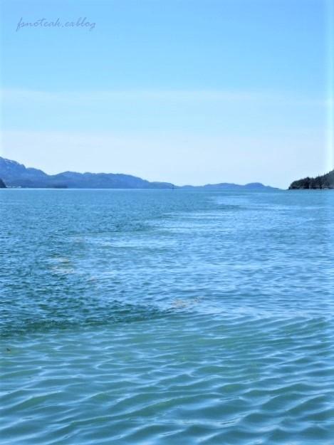 海へ野へ Mooseすね肉ポットロースト_d0356844_12382693.jpg