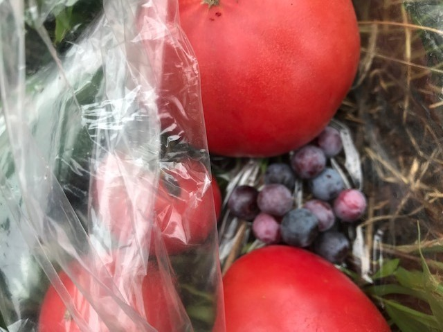 トマト、ブルーベリーなど六国見山の恵み集合!7・7_c0014967_10283173.jpg