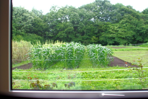 キシノウエンは、長野県の東側(群馬県寄り)です。_c0110869_07452980.jpg