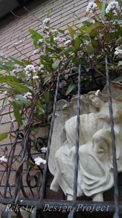 一夜限りの神秘の白い花~❤_f0029571_01062301.jpg