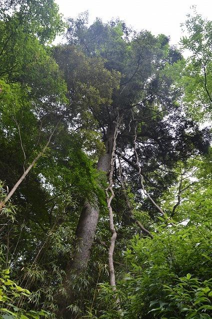 東北大学植物園_c0124100_14595478.jpg