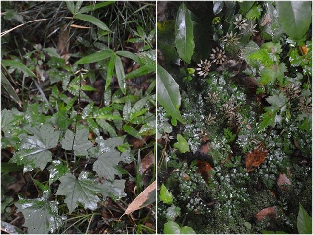東北大学植物園_c0124100_15000190.jpg