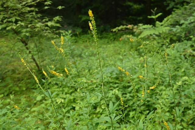 東北大学植物園_c0124100_15000452.jpg