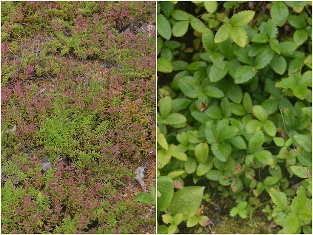 東北大学植物園_c0124100_15002767.jpg