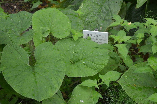 東北大学植物園_c0124100_15101827.jpg