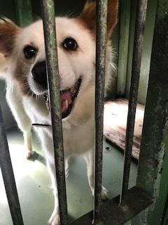 【犬・移動先募集】ちょこちゃん検査に行ってきました_f0242002_18153160.jpg