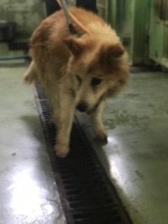 【犬・移動先募集】ちょこちゃん検査に行ってきました_f0242002_18153678.jpg