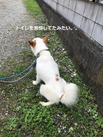 【犬・移動先募集】ちょこちゃん検査に行ってきました_f0242002_18284280.jpg