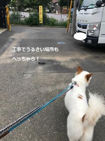 【犬・移動先募集】ちょこちゃん検査に行ってきました_f0242002_18284787.jpg