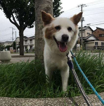【犬・移動先募集】ちょこちゃん検査に行ってきました_f0242002_18312412.jpg