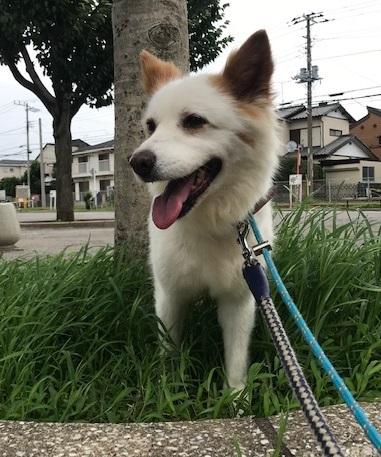 【犬・移動先募集】ちょこちゃん検査に行ってきました_f0242002_18313039.jpg