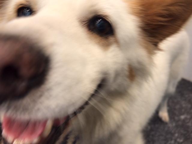 【犬・移動先募集】ちょこちゃん検査に行ってきました_f0242002_18362712.jpg