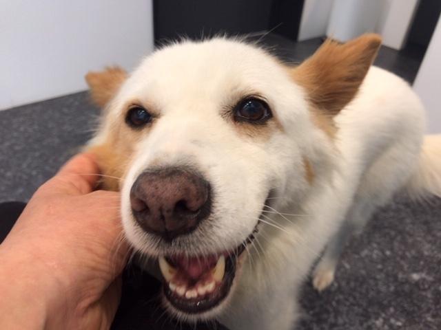 【犬・移動先募集】ちょこちゃん検査に行ってきました_f0242002_18363414.jpg