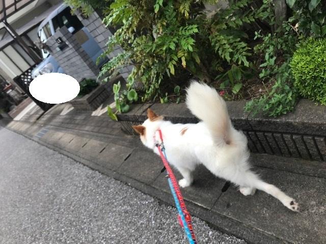 【犬・移動先募集】ちょこちゃん検査に行ってきました_f0242002_18392351.jpg