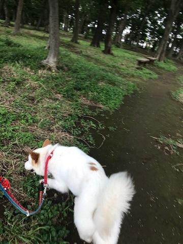 【犬・移動先募集】ちょこちゃん検査に行ってきました_f0242002_18393168.jpg
