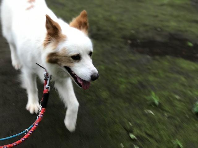 【犬・移動先募集】ちょこちゃん検査に行ってきました_f0242002_18393841.jpg