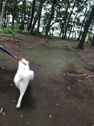【犬・移動先募集】ちょこちゃん検査に行ってきました_f0242002_18425012.jpg