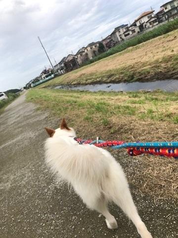 【犬・移動先募集】ちょこちゃん検査に行ってきました_f0242002_18430964.jpg