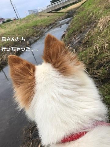 【犬・移動先募集】ちょこちゃん検査に行ってきました_f0242002_18440362.jpg