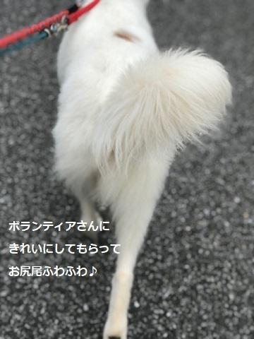 【犬・移動先募集】ちょこちゃん検査に行ってきました_f0242002_18441044.jpg