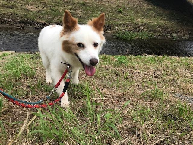 【犬・移動先募集】ちょこちゃん検査に行ってきました_f0242002_18453563.jpg