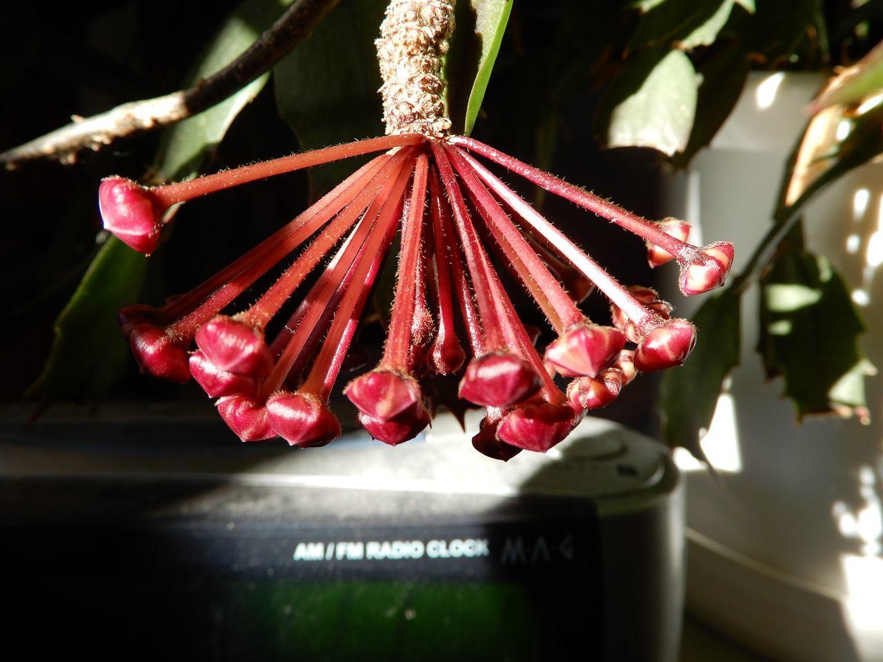 エアプランツの種子が熟した!?_c0025115_22463397.jpg