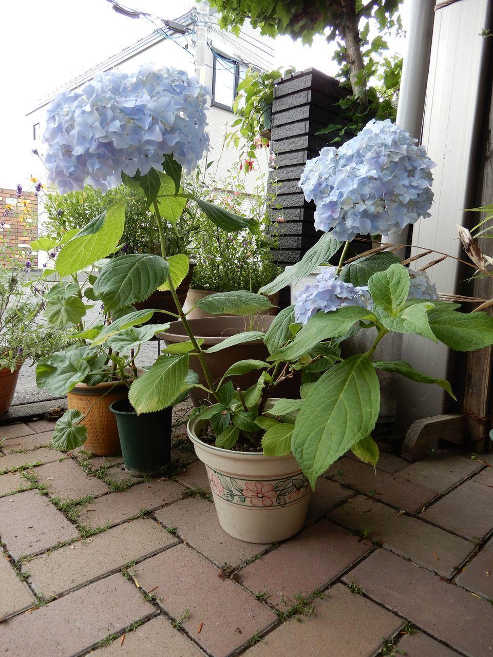 エアプランツの種子が熟した!?_c0025115_22482806.jpg