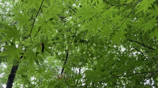 日々のコトの葉だより_b0174425_17032144.jpg